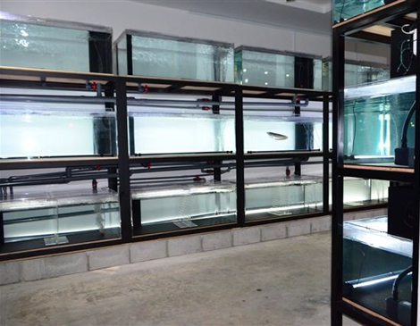 N1wanRed natural aquarium 店内
