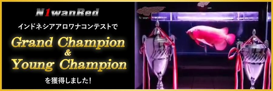 N1wanRed インドネシアアロワナコンテストでGrand Champion & Young Championを獲得しました!