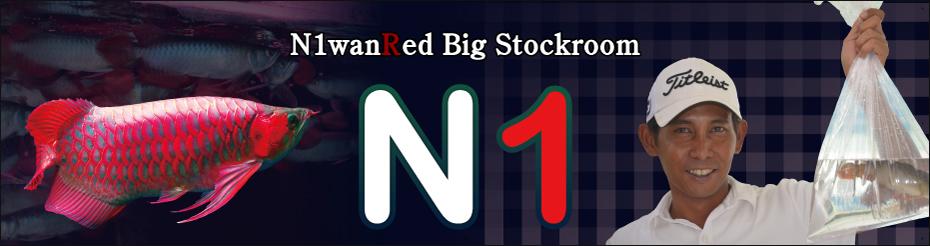 N1wanRed Japan